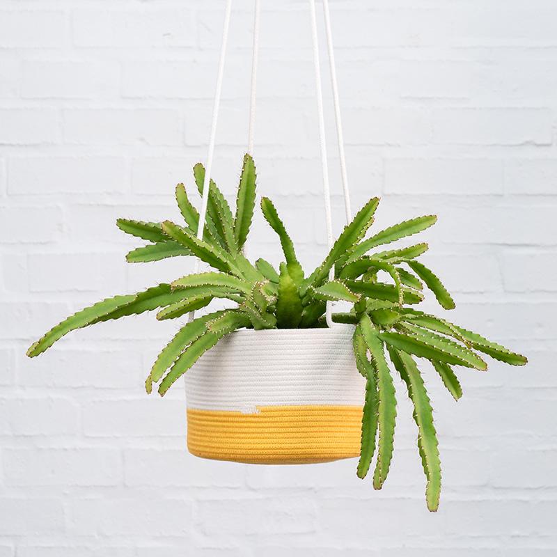 Plantify