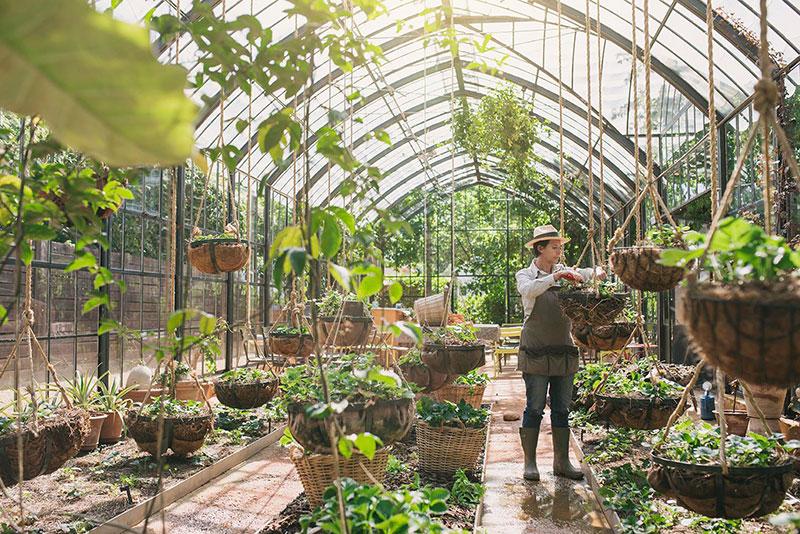 Babylonstoren-Greenhouse