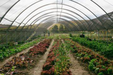 Spier Food Garden Workshop