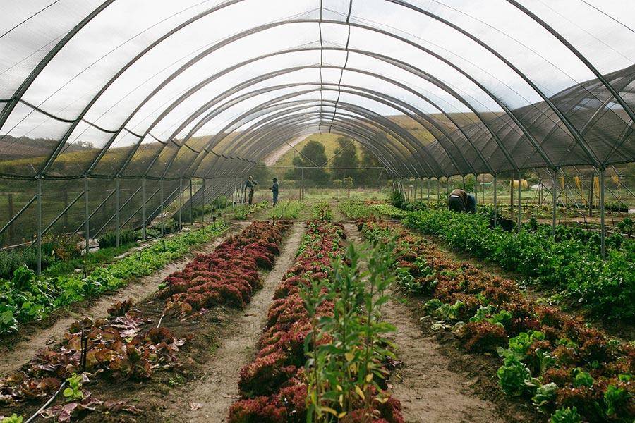 Spier Food Garden workshops