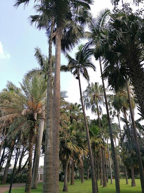 Durban Botanical Garden