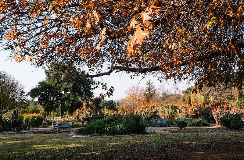 Joburg Botanical Garden